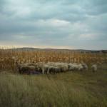 lisane_krajolik26