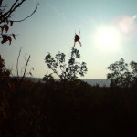 lisane_krajolik35