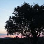 lisane_krajolik9
